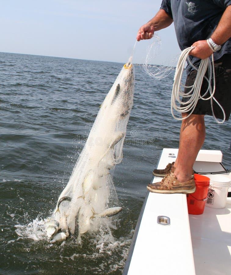 Download Pesca foto de archivo. Imagen de deporte, redes, pescados - 1285676