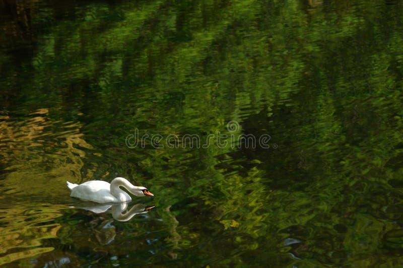 Download Pesca accelerata fotografia stock. Immagine di tranquility - 7313144