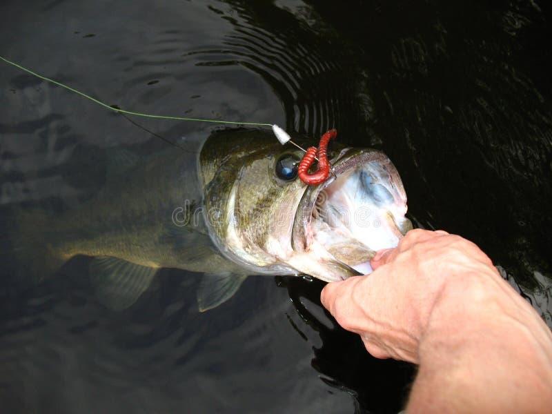Pesca baixa Largemouth fotografia de stock