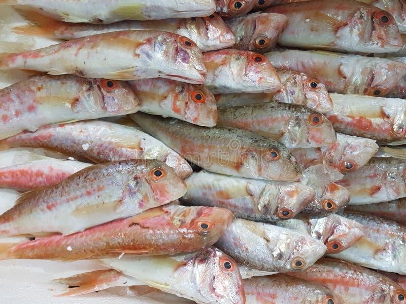Pesca barbuna rojo de los lithrins de las cabezas en fila en el mercado de pescados griego imagen de archivo