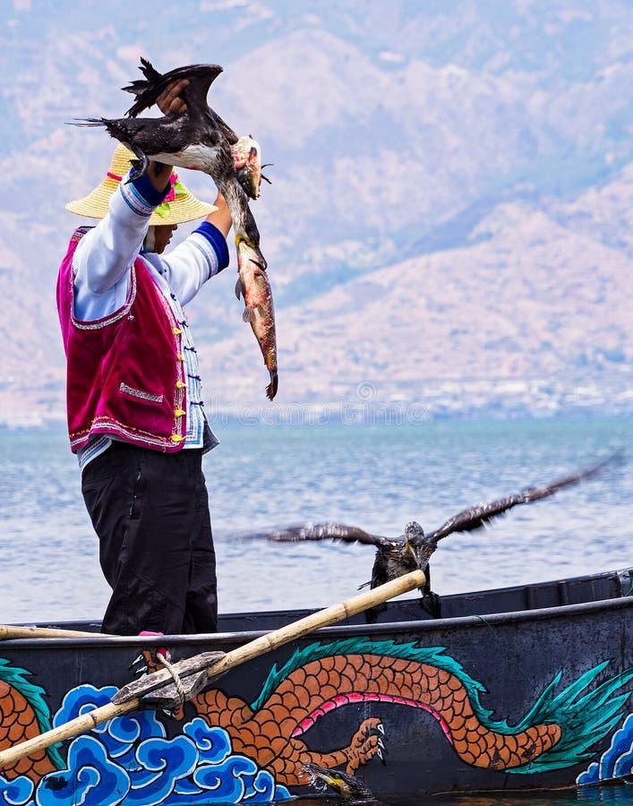 Pesca chinesa do homem com os pássaros dos cormorões no lago Erhai - Yunnan, China foto de stock