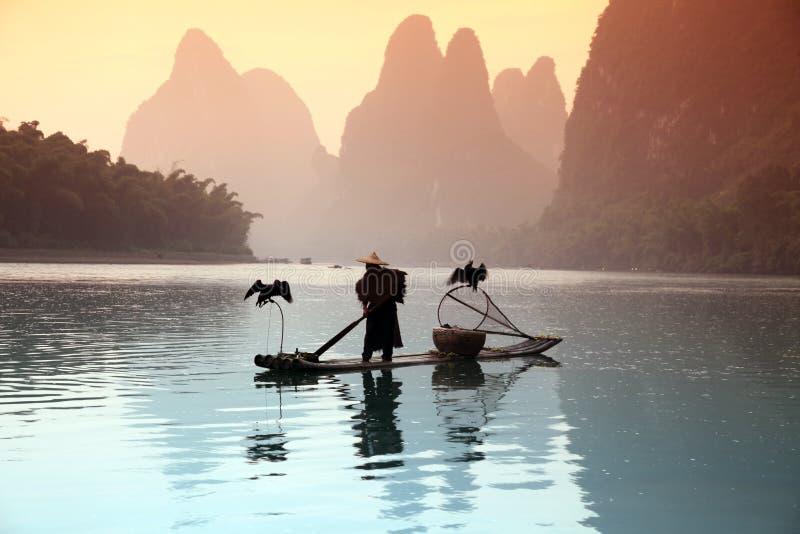 Pesca chinesa do homem com pássaros dos cormorões foto de stock