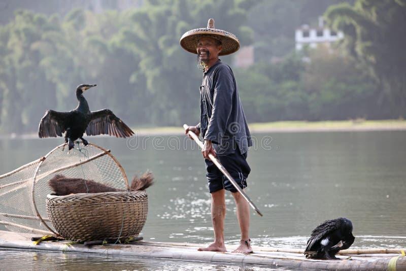 Pesca chinesa do homem com pássaros dos cormorões dentro foto de stock royalty free