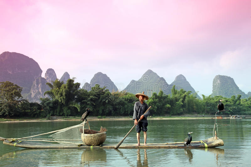 Pesca chinesa do homem com pássaros dos cormorões dentro imagem de stock