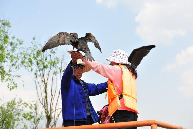 Pesca chinesa do homem com pássaros dos cormorants imagens de stock