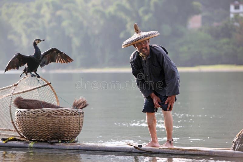 Pesca cinese dell'uomo con gli uccelli dei cormorani dentro fotografie stock