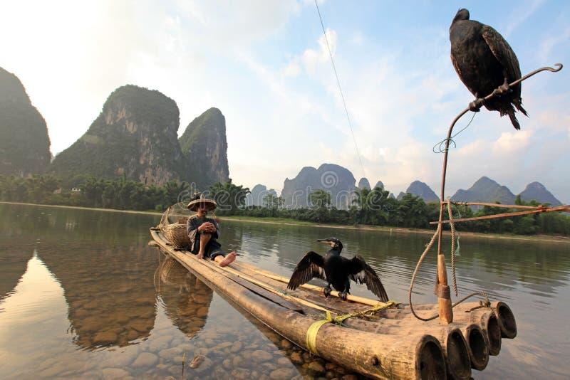 Pesca cinese dell'uomo con gli uccelli dei cormorani dentro fotografia stock libera da diritti