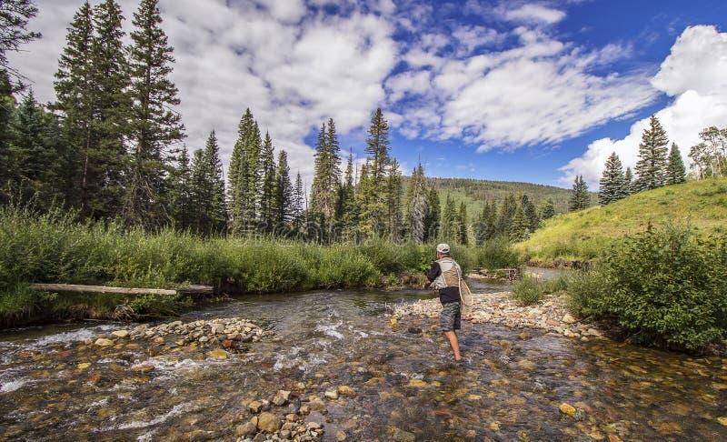 Pesca com mosca em um córrego claro da truta em Rocky Mountains perto do Telluride, Colorado fotografia de stock