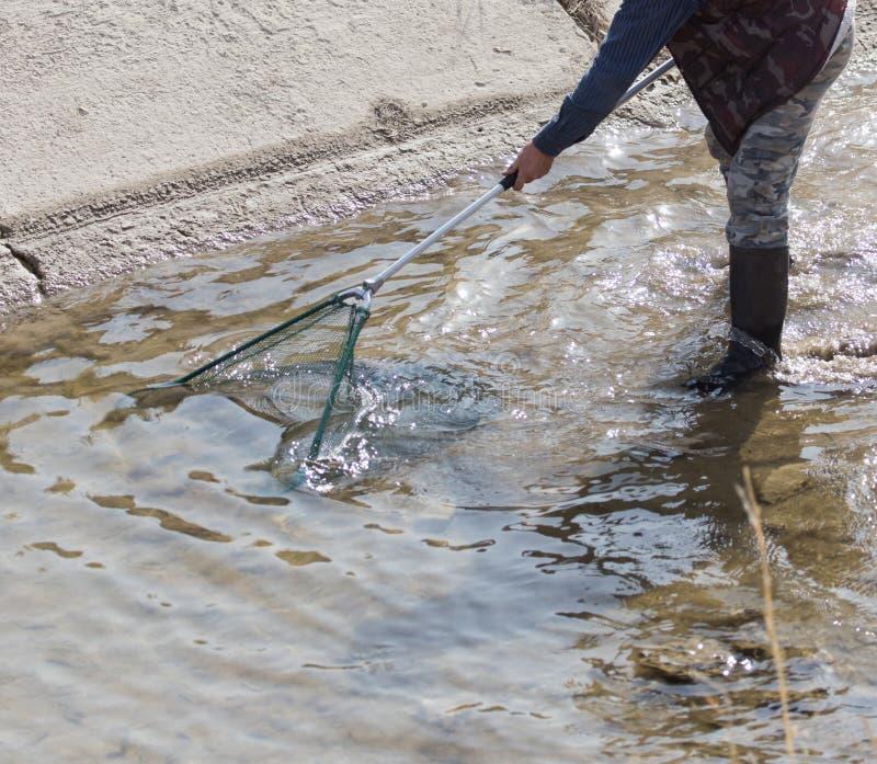 Pesca com uma rede no rio imagens de stock royalty free