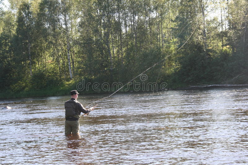 Pesca con la mosca i Byskeälv, Norrland Svezia fotografie stock