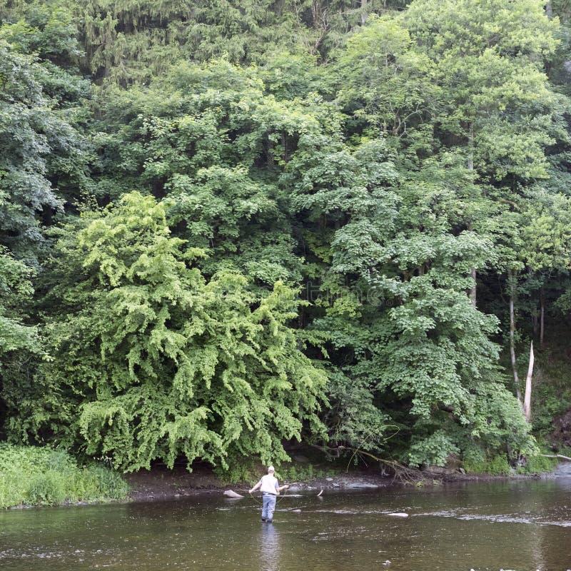 Pesca con mosca del hombre en el río ourthe cerca de en Ardenas de La Roche en la parte francófona de Bélgica fotos de archivo