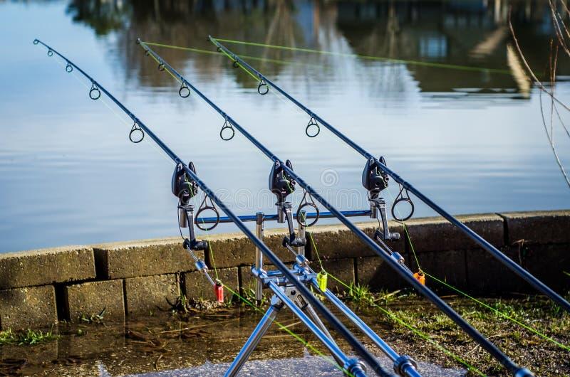 Pesca da carpa fotografia de stock