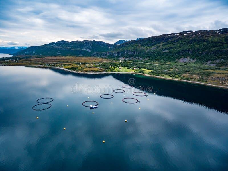 Pesca de color salmón de la granja imágenes de archivo libres de regalías