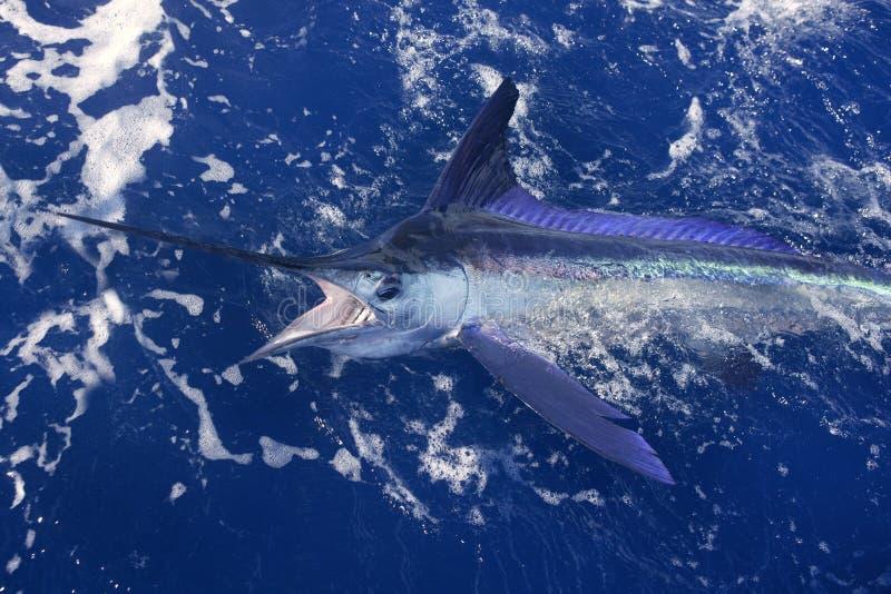Pesca de esporte atlântica do grande jogo do espadim branco fotos de stock