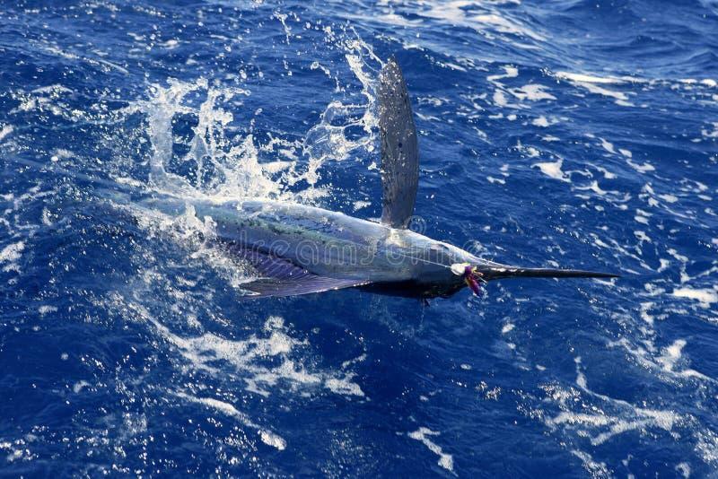 Pesca de esporte atlântica do grande jogo do espadim branco foto de stock