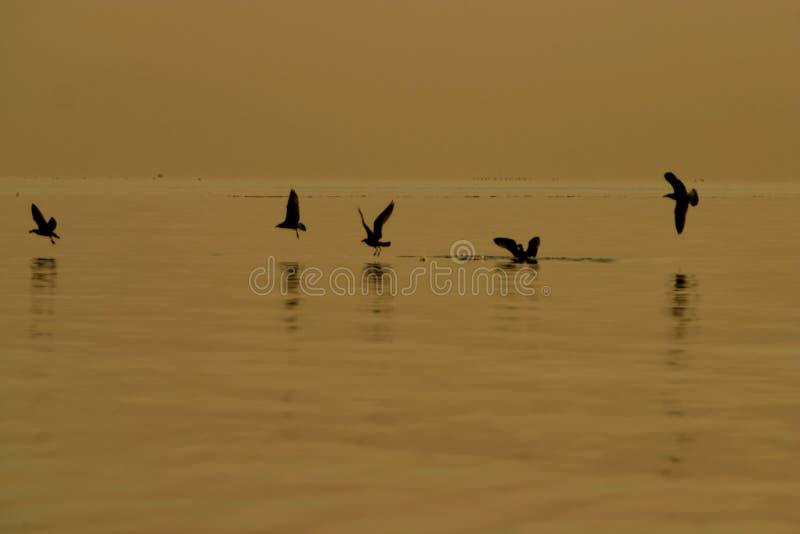 Pesca de la gaviota fotografía de archivo libre de regalías
