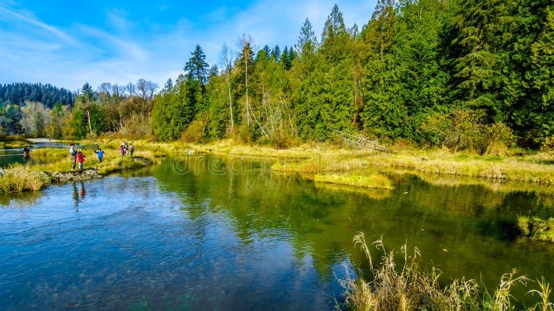 Pesca de los lugares de desove de Stave River río abajo desde la presa de Ruskin en Hayward Lake cerca de la misión, A.C., Canadá imagen de archivo libre de regalías