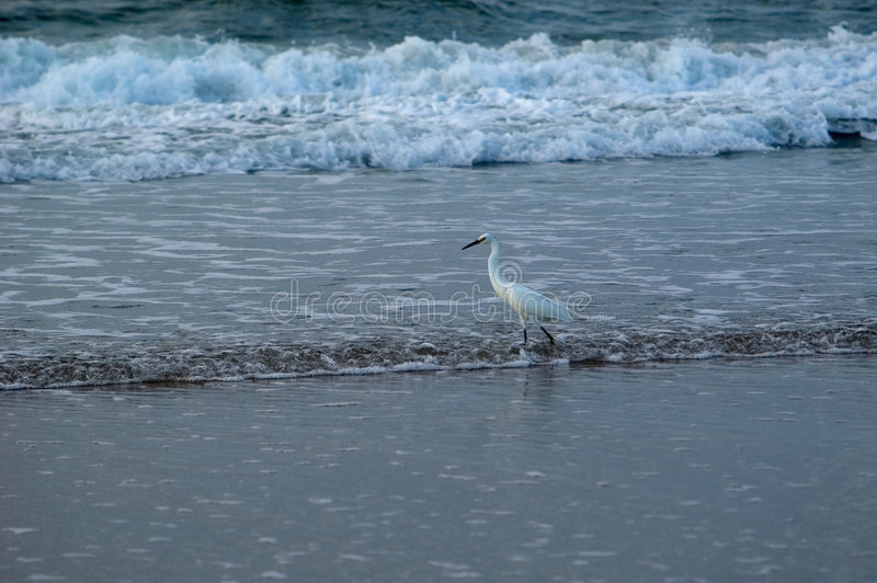 Pesca de resaca del pájaro foto de archivo