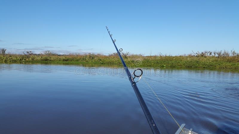 Pesca de Tarrarira imagenes de archivo