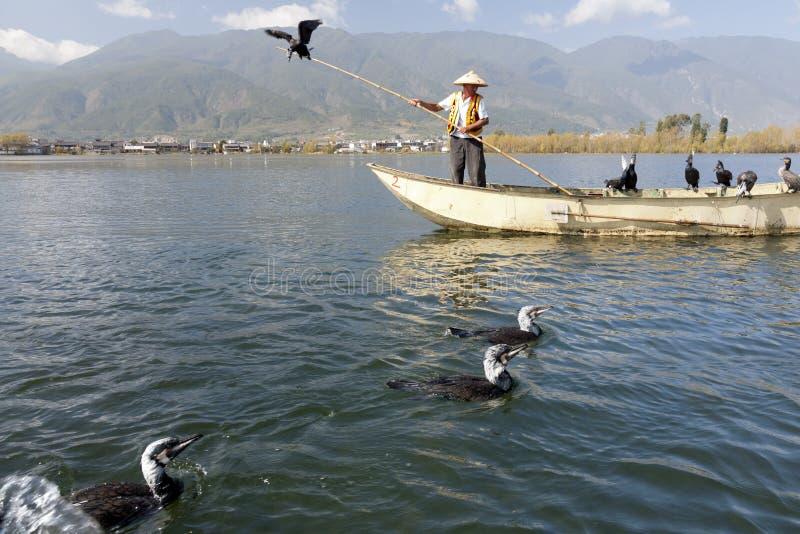 Pesca del Cormorant in Cina fotografie stock