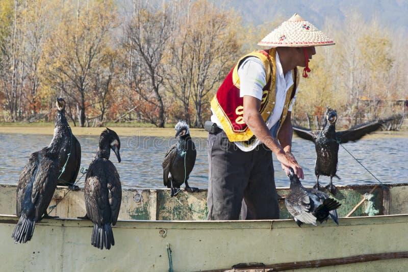 Pesca del Cormorant in Cina immagine stock