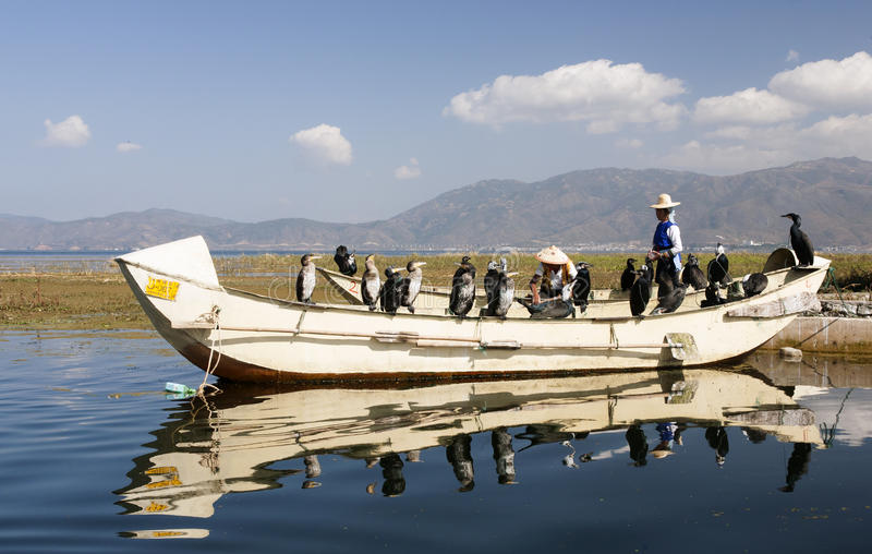 Pesca del Cormorant in Cina fotografia stock