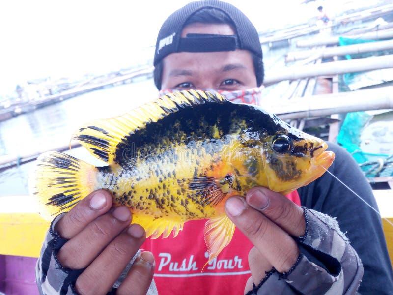 Pesca del diavolo rosso fotografia stock libera da diritti