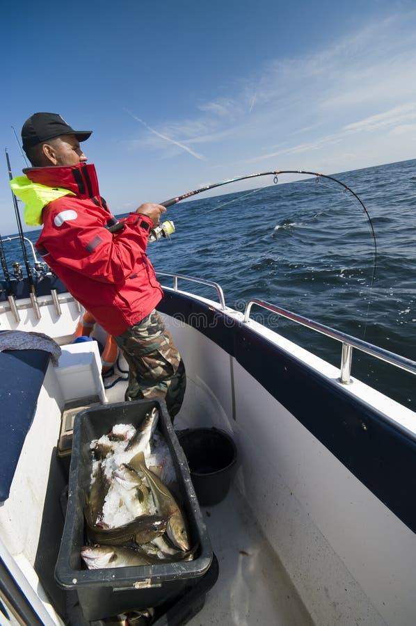 Pesca del hombre para los bacalaos en el mar fotografía de archivo libre de regalías
