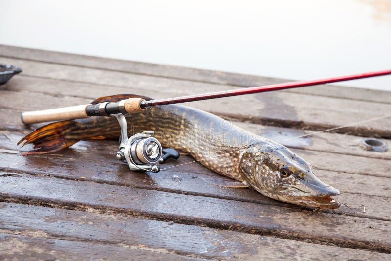 Pesca del trofeo E fotos de archivo