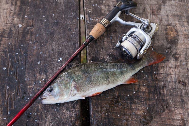 Pesca del trofeo Equipo de agua dulce grande de la perca y de pesca en fondo de madera imagen de archivo