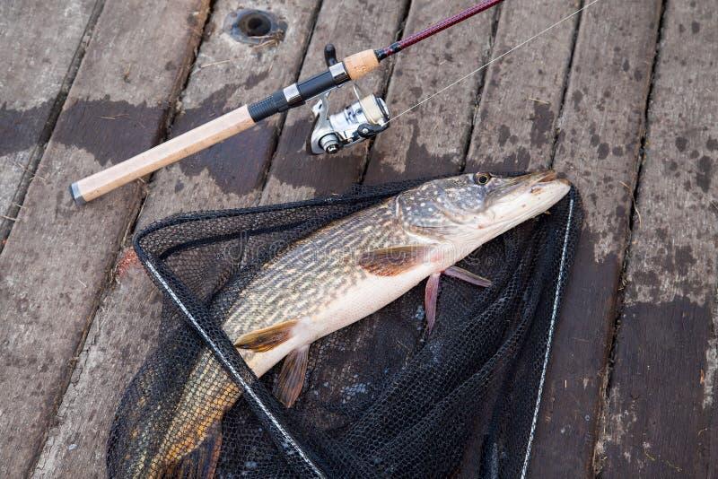 Pesca del trofeo Mentiras de agua dulce grandes del equipo del lucio y de pesca en red de pesca negra fotografía de archivo libre de regalías