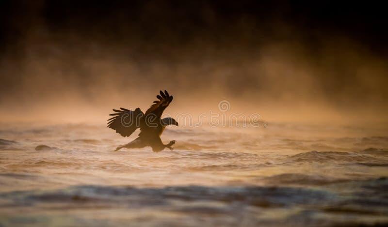 Pesca dell'aquila calva immagine stock libera da diritti