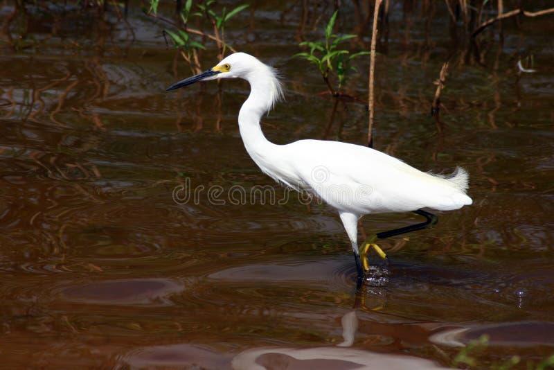 Download Pesca della gru fotografia stock. Immagine di nido, pesca - 203942