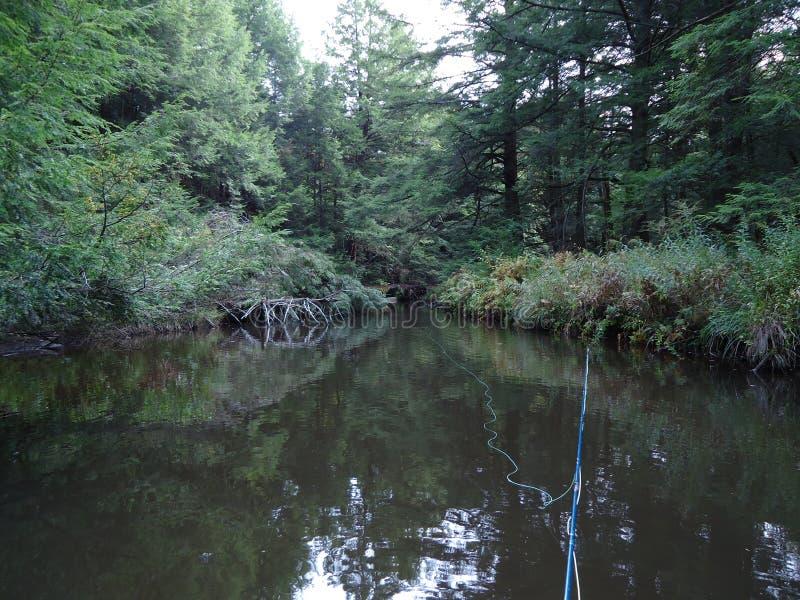Pesca di mosca in acque calme immagini stock