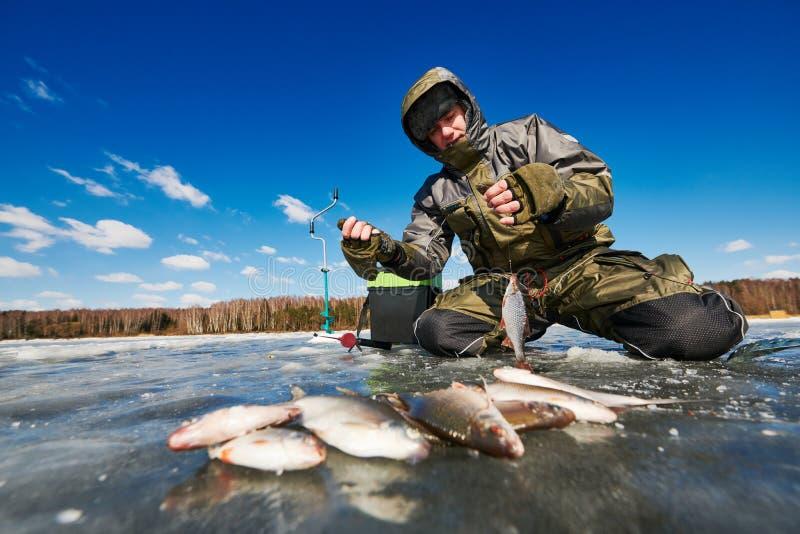 Pesca do inverno no gelo Captura de peixes da barata nas mãos do pescador ou do pescador imagem de stock
