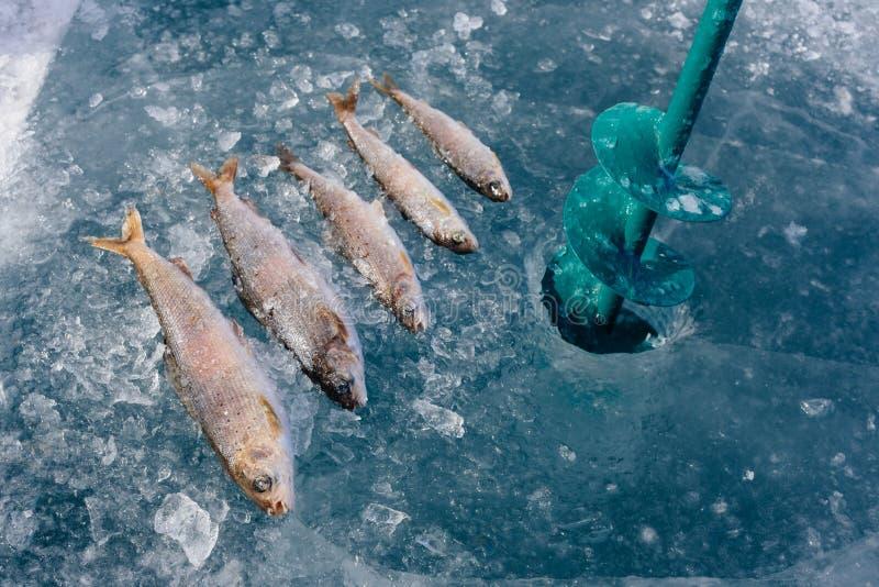 Pesca do inverno no lago fotos de stock