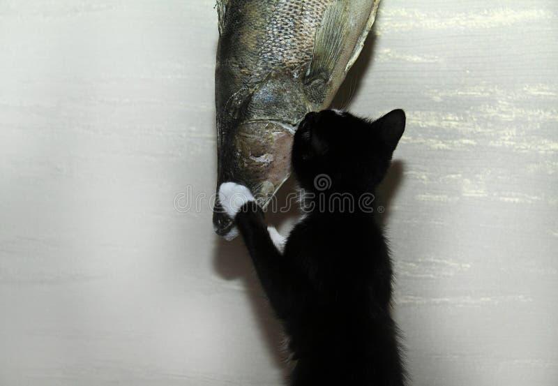 Pesca do wow imagem de stock