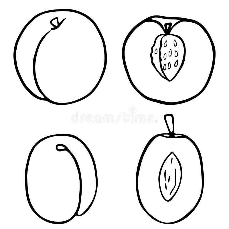 Pesca e prugna della frutta del profilo royalty illustrazione gratis