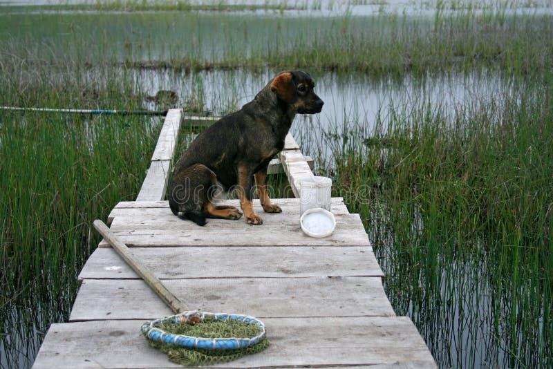 Pesca e un cane fotografia stock