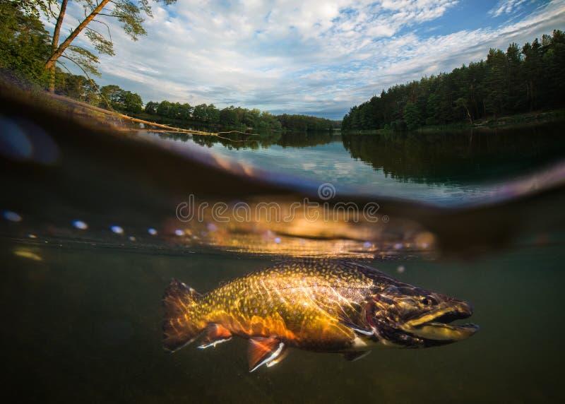 Pesca El primer cerró de un gancho de pescados debajo del agua imágenes de archivo libres de regalías