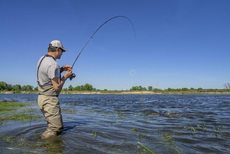 Pesca grande do pique Peixes da captura do pescador na água no rio foto de stock royalty free