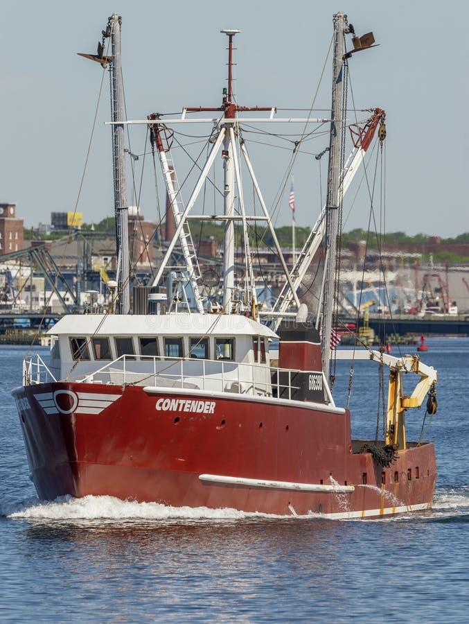 Pesca indo do concorrente de Scalloper imagem de stock