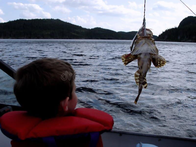 Pesca no barco imagem de stock