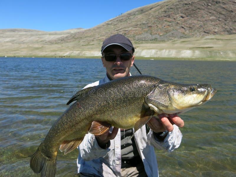 Pesca - osman mongolo immagine stock libera da diritti