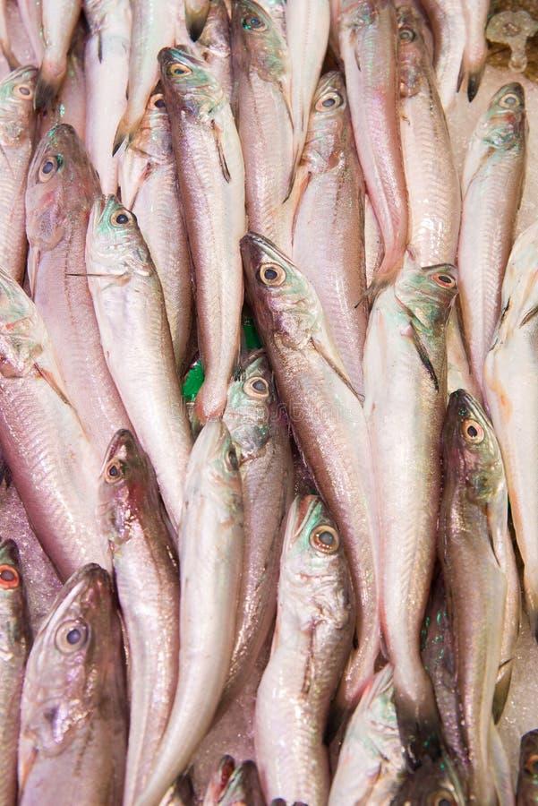 Pescadas novas fotografia de stock royalty free