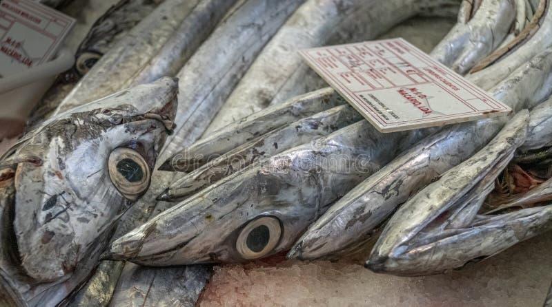 Pescado espada de plata en venta fotos de archivo libres de regalías