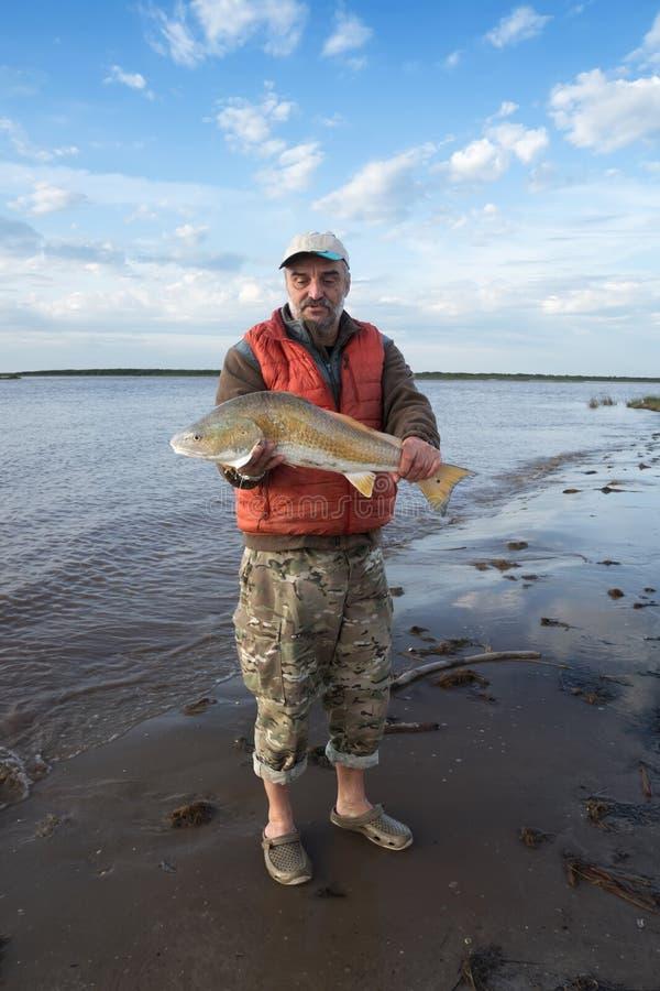 Pescador com o ocellatus dourado grande do Sciaenops do cilindro vermelho dos peixes em suas mãos Pesca do outono Golfo do México fotos de stock royalty free