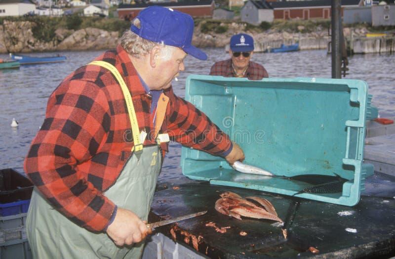 Pescador com o prendedor da cavala fotografia de stock royalty free