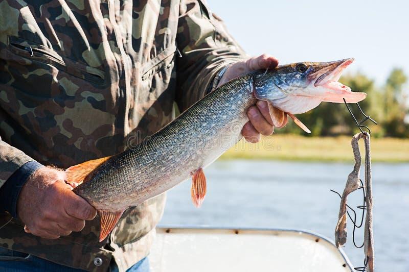 Pescador con un lucio fotos de archivo