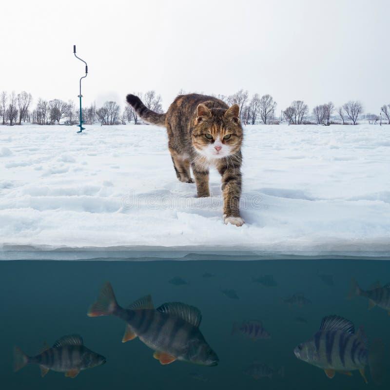 Pescador do gato no gelo nevado no lago acima da tropa de peixes da vara Fundo da pesca do gelo do inverno imagem de stock